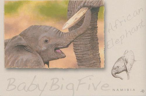 Big Baby Five, Elephant